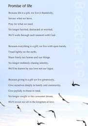 promise-birds-2
